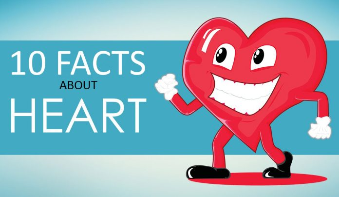 10-facts-about-heart